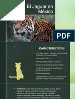 El Jaguar en México