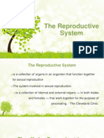 1.the Reproductive System