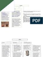 anatomia bolsa escrotales.docx
