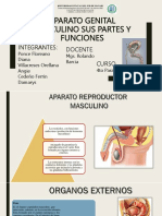 Aparato Genital Masculino SUS PARTES Y FUNCIONES