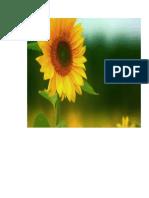 bunga matahari.doc