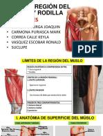 Anatomía Muslo y Rodillo(1)