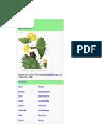 Opuntia Ficus Tuna