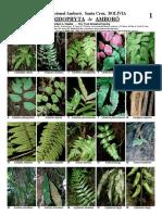 Pteridofitas de Amboro-Bolivia.pdf