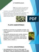 Planta Gimnospermas