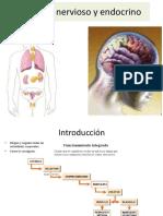 El-Sistema-nervioso-y-endocrino_Sciencia.pdf
