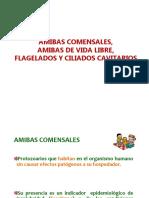 Amibas Comensales 2018 - Copia
