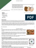 Semilla - Wikipedia, La Enciclopedia Libre