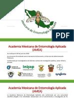 Amea Chiapas