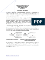 Sintesis de Proteinas.doc