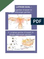 soal anatomi 2018 quis 3.docx