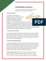 FUNCIONES DE LA CÉLULA.docx