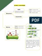 Proteínas asociadas a microtúbulos.docx