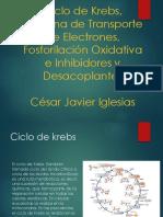 bioquimica-130908003755-
