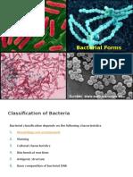 klasifikasi bakteri
