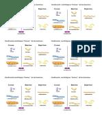 Clasificación Morfológica Formas de Bacterias