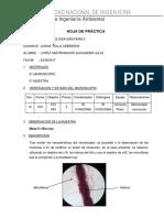 HOJA DE INFORME.docx