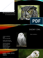 owls of washington  3