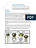 Aparatos Bucales en Insectos