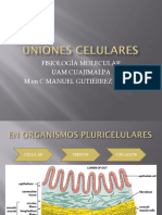 uniones celulares fisiologia