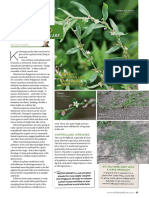 Pasture Weed Watch_Wireweed