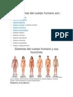 Los Sistemas Del Cuerpo Humano Son