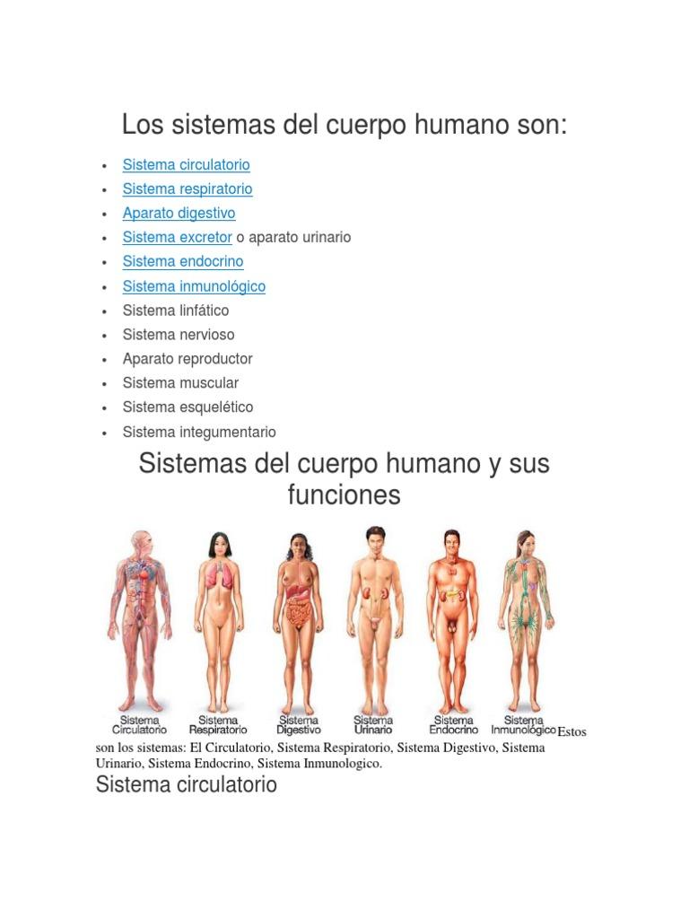 Los Sistemas Del Cuerpo Humano Son | Sistema digestivo humano | Sistema  circulatorio