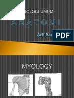 2. Myologi