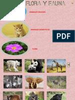 Flora y Fauna.pptx
