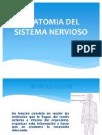 Anatomia Del Sistema Nervioso Ok