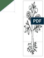 Partes de La Planta y Sus Funciones