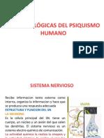 Bases Biologicas Del Psiquismo