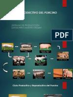 Ciclo Productivo y Reproductivo del Porcino.pptx