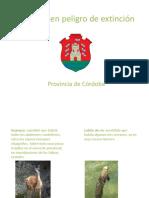 Práctica Power Point - Animales en Peligro de Extinción Cordoba