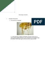 Description of the parasite.docx