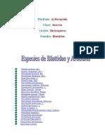 cucaracha.pdf