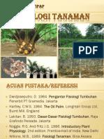 tanaman kelapa sawit