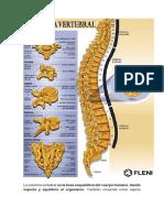 La columna vertebral.docx