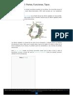 Célula Vegetal_ Partes, Funciones, Tipos - Lifeder