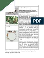 Lalat Buah Hhpt PDF