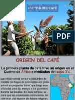 00.1. Cultivo Del Café