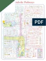 metabolic_pathways_poster.pdf