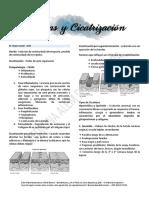 Patología Quirúrgica - Heridas y Cicatrización