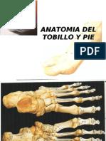 Anatomia del tobillo y pie
