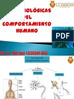 54408711 Bases Biologicas Del Comportamiento Humano 120823122424 Phpapp02