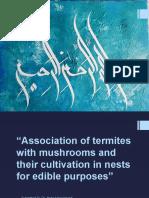 Termites Pptx
