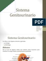 Sistema Genitouribario