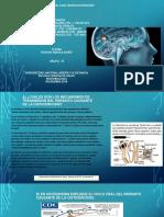 _trabajogrupal_ Estudio Del Caso Neurocisticercosis (1)