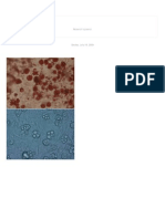 Life Science_ 3T3-L1 Adipocyte Differentiation Protocol