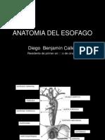 presentacion esofago